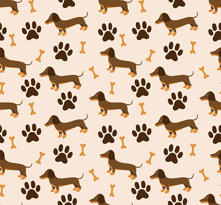 Vector seamless pattern in dachshund for print and web design on white background eps 10