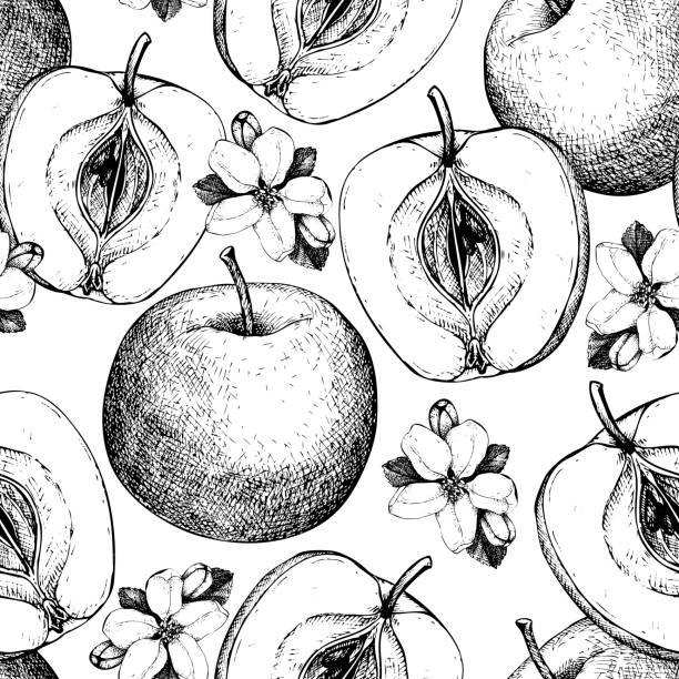 vector seamless pattern with apple fruits Vector background with  hand drawn apple illustration. Seamless pattern with fruits sketch. Vintage botanical garden drawing. apple blossom stock illustrations