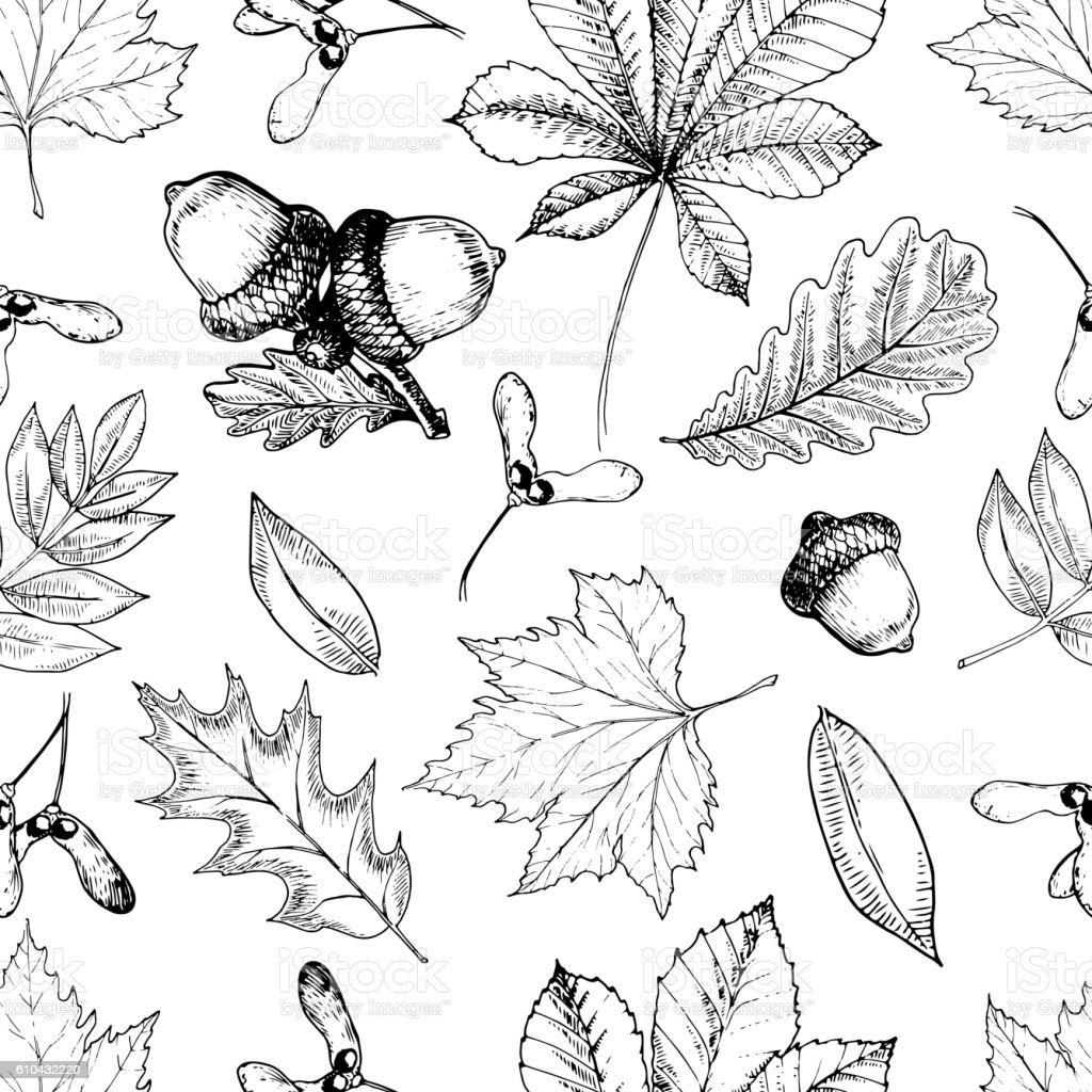 Vector seamless pattern with autumn leaves. Oak, mapple, chestnut, acorns. - ilustración de arte vectorial