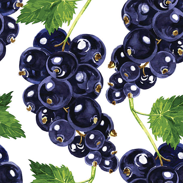 vector seamless pattern with blackcurrant vector seamless pattern with watercolor drawing blackcurrant, hand drawn vector illustration black currant stock illustrations