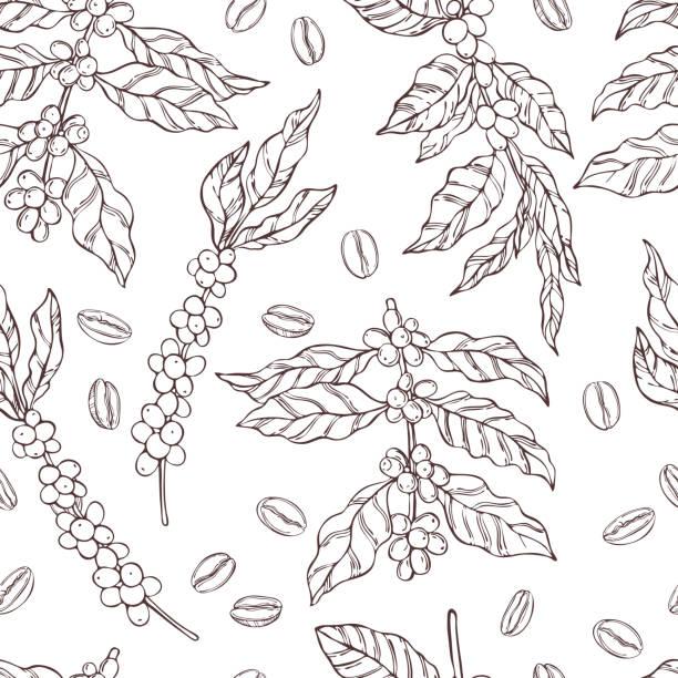 ilustrações de stock, clip art, desenhos animados e ícones de vector  seamless pattern with   coffee  plants and beans. - natureza close up