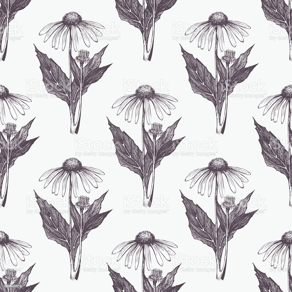 Vector seamless pattern with echinacea flowers vector art illustration