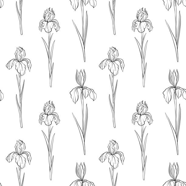 vector seamless pattern with flowers of iris vector seamless pattern with drawing flowers of iris, floral background, hand drawn illustration iris plant stock illustrations