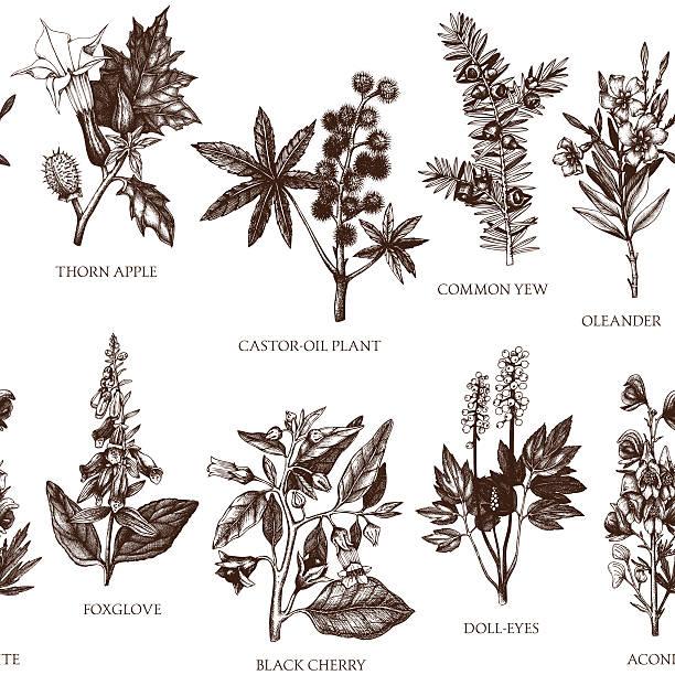 vektor nahtloses muster mit handgezeichnet komplizierter pflanzen und illustrationen. - eisenhut stock-grafiken, -clipart, -cartoons und -symbole