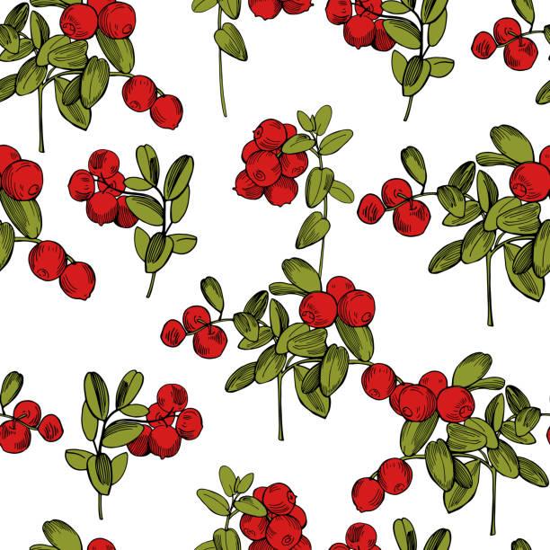 ilustrações de stock, clip art, desenhos animados e ícones de vector seamless pattern with  lingonberry. cowberry - natureza close up