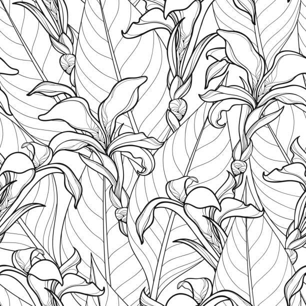 Vector seamless pattern with ornate Canna lily or Canna flower and leaves in black on the white background. Vector seamless pattern with ornate Canna lily or Canna flower and leaves on the white background. Floral pattern in contour style with outline flower for tropical summer design and coloring book. coloring book pages templates stock illustrations