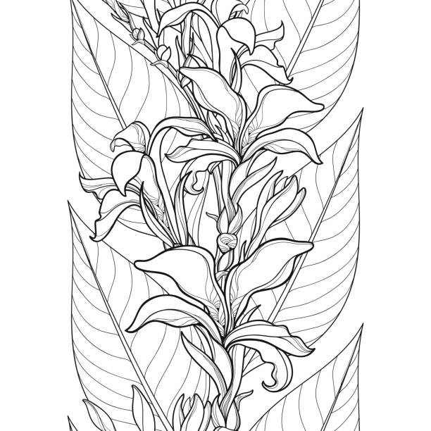 Vector seamless pattern with outline Canna lily or Canna flower and leaves on the white background. Vector seamless pattern with outline Canna lily or Canna flower and leaves on the white background. Floral pattern in contour style with ornate flowers for tropical summer design and coloring book. coloring book pages templates stock illustrations