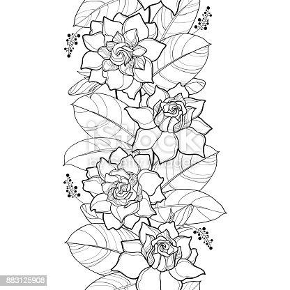 Ilustración de Patrón Transparente De Vector Con Contorno Gardenia ...