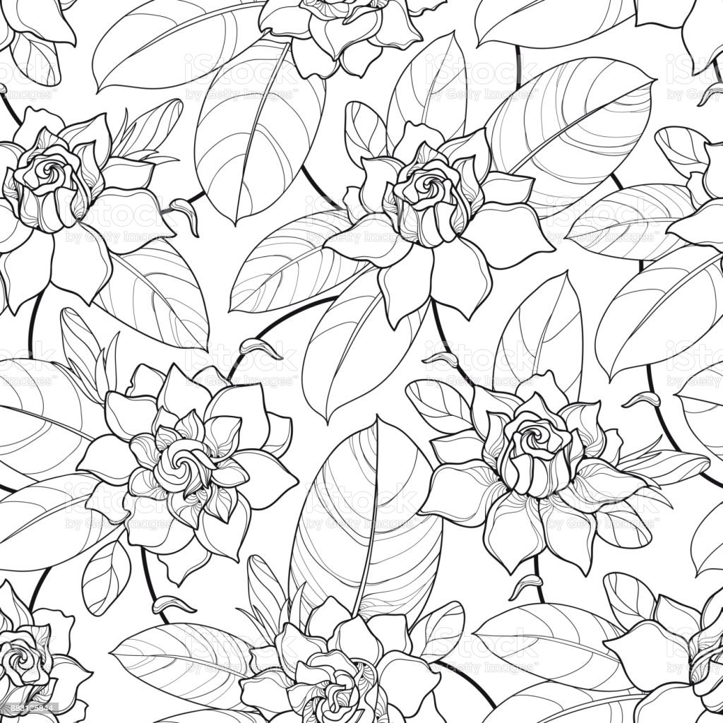 Black Flower And Bud Pattern Royalty Free Stock Photos: Vector Seamless Pattern With Outline Gardenia Ornate