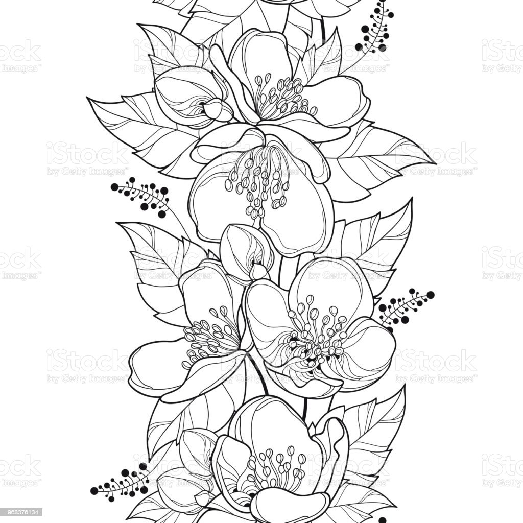 Vector Seamless Pattern With Outline Jasmine Flower Bunch Bud And