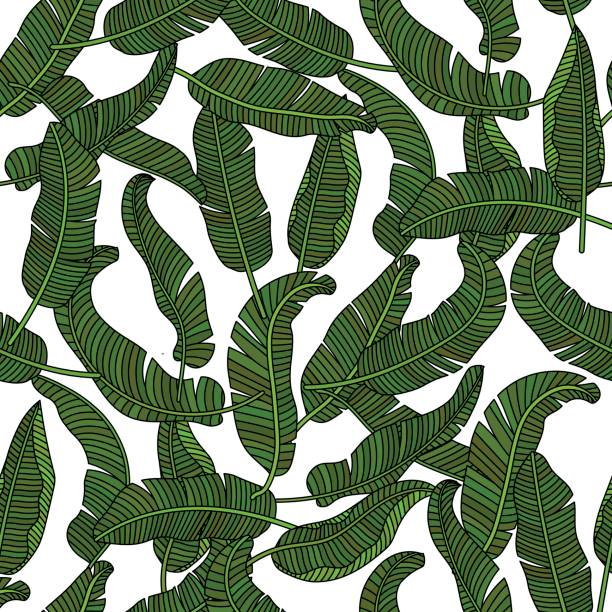 Vector seamless pattern with tropical banana leaves vector art illustration