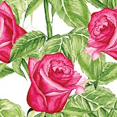 Vector Seamless  Roses Watercolor Pattern. Floral pattern with of red roses on white background. Background for your design web pages, wedding invitations, save the date cards, scrapbook and etc
