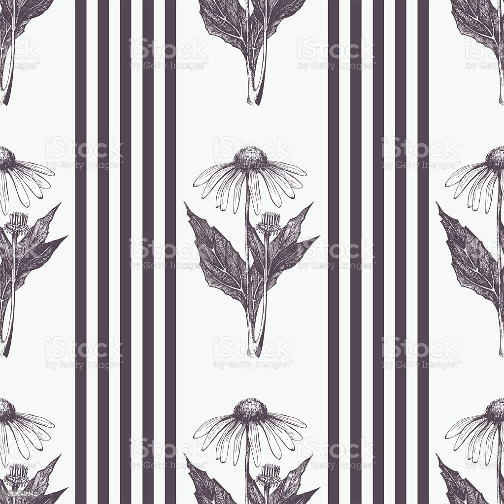 Vector seamless striped pattern with echinacea flowers vector art illustration