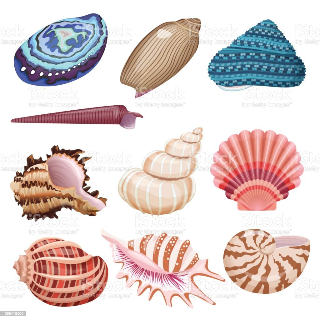 Vector seashells set.