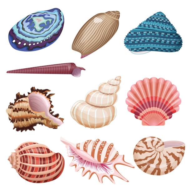 vector seashells set. - seashell stock illustrations, clip art, cartoons, & icons