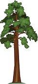 Vector illustration of Big Sequoia Tree