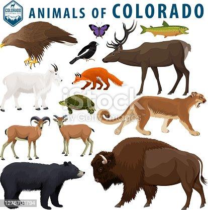 vector set - animals of Colorado: Bison, black bear, mountain goat, puma,  bighorn sheep,  turtle, red fox, golden eagle, elk, lark bunting, colorado hairstreak,  greenback cutthroat trout.
