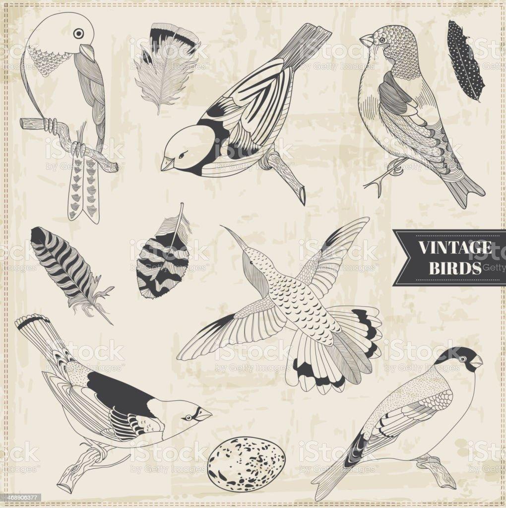 Vector Set: Calligraphic Hand drawn Birds royalty-free stock vector art