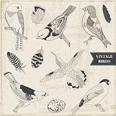 Vector Set: Calligraphic Hand drawn Birds