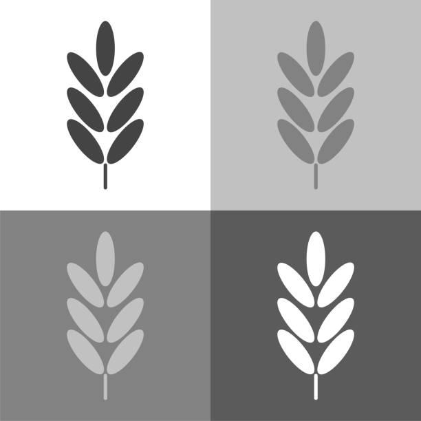 vektor setzen symbol ähren, getreide. ohr des hafers. roggen-ohren auf weiß-grau-schwarze farbe. - gluten stock-grafiken, -clipart, -cartoons und -symbole