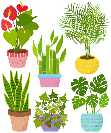 Vector set indoor house plant in pot. Collection of flat styled hand drawn exotic houseplant. Cute illustration beautiful design elements