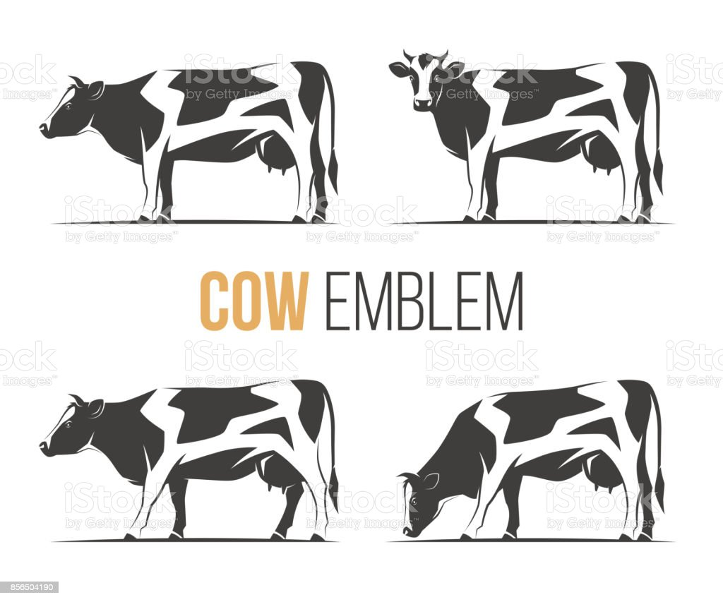 Vector set of a stylish spotted holstein cows. Emblem, icon, label designs. vector art illustration
