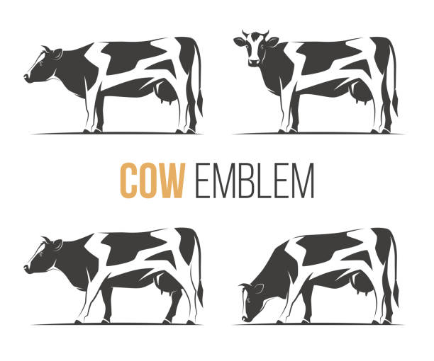 vector set of a stylish spotted holstein cows. emblem, icon, label designs. - cow stock illustrations, clip art, cartoons, & icons