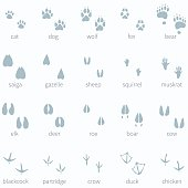 Vector Set of Animals Footprint  in the Snow
