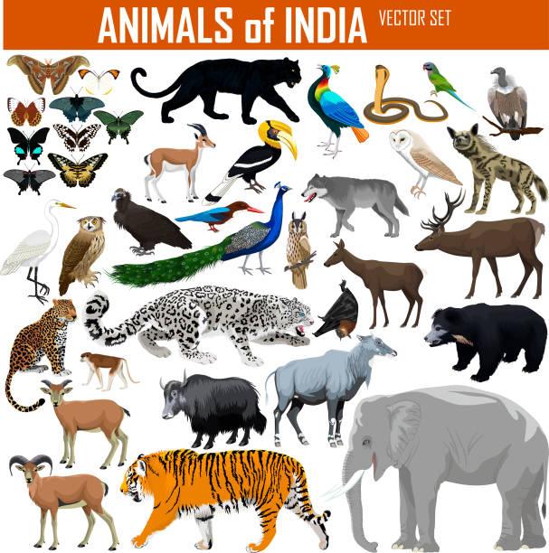 vektor-satz von tieren von indien - megabat stock-grafiken, -clipart, -cartoons und -symbole