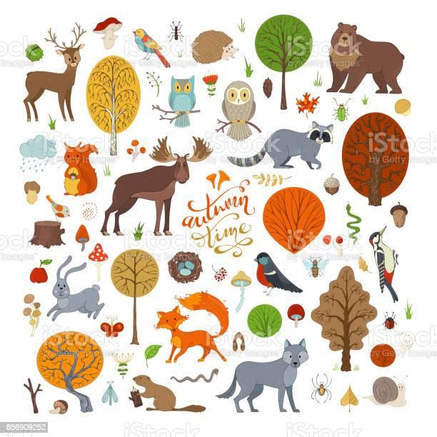 Vector set of autumn forest trees and animals vector id856909252?b=1&k=6&m=856909252&s=612x612&h=izoj7mxiusqqhvwzwqy8yjuzevihsddvnctnxjtxhka=