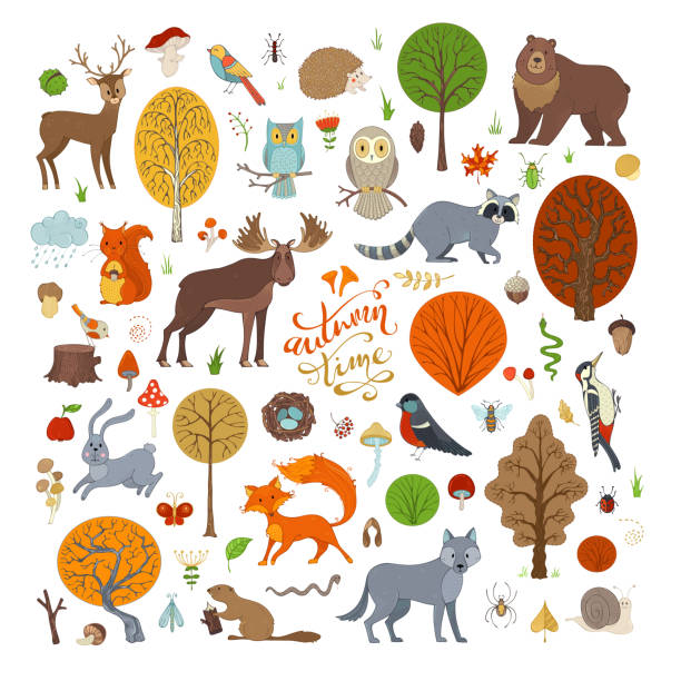 Vector set of autumn forest trees and animals. Adorable collection for children books, invitations and posters. Beaver, deer, fox, hedgehog, owl, rabbit, raccoon, snail, squirrel, bee, ant, mushroom. beaver stock illustrations