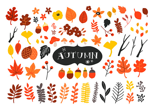 Vector set of autumn icons. Falling leaves, acorns, pinecones and old twigs.