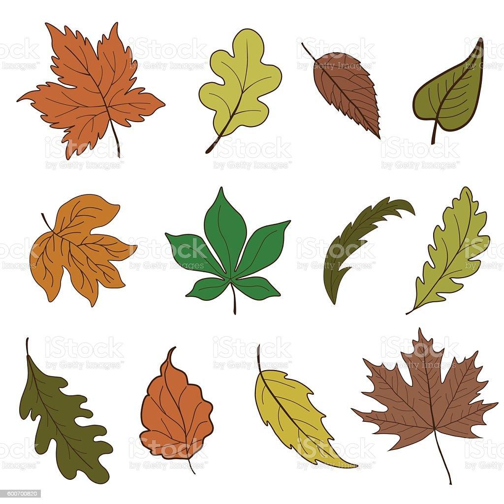 Vector set of autumn leaves vector art illustration