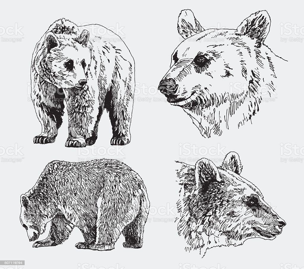 Vektor Ein Satz Von Bären Stock Vektor Art und mehr Bilder von ...