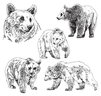 Vector set of bears