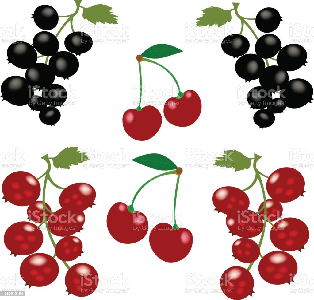 Vector set of berries.  Cherry, black currant and red currant. vector art illustration
