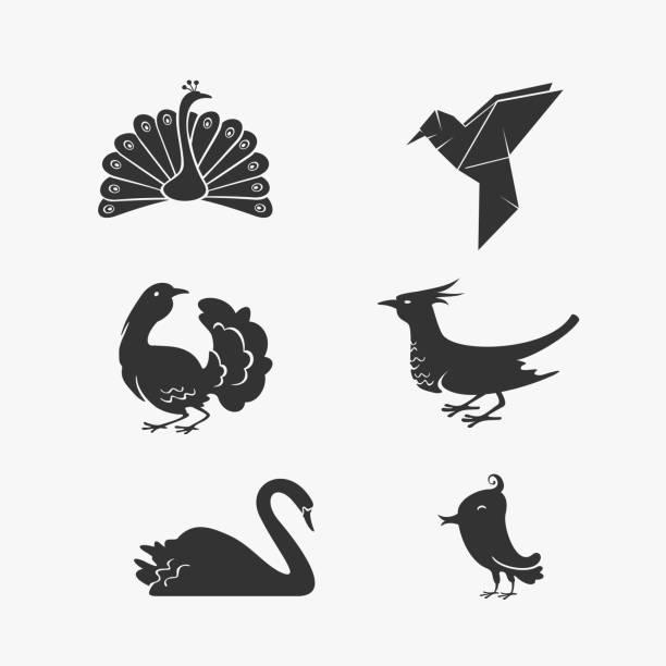 vector set of bird symbols - peacock stock illustrations