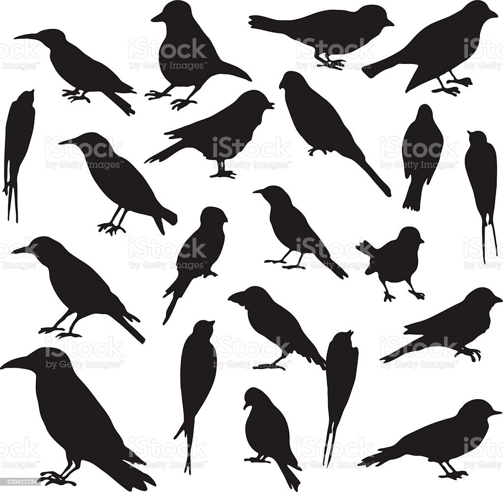 vector set of birds silhouettes vector art illustration