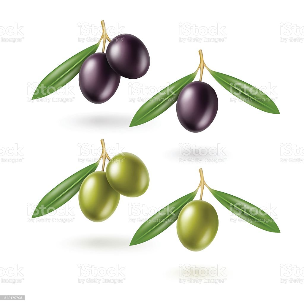 Vector Set of Black and Green Olives Branches with Leaves vector art illustration