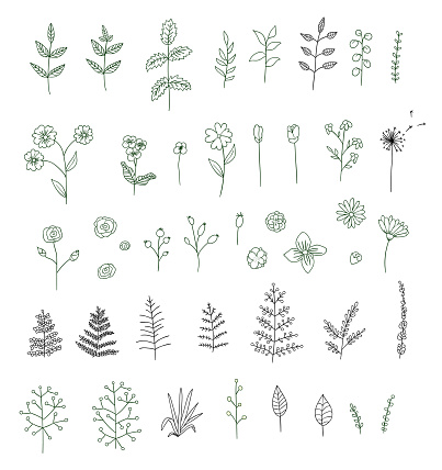 Vector set of black and white flowers, herbs, plants.