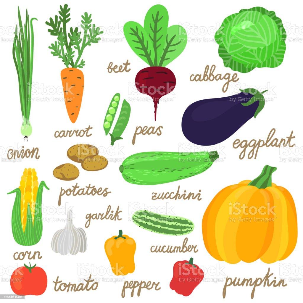 Ilustración De Vector Conjunto De Mano Brillante Dibujo Verduras