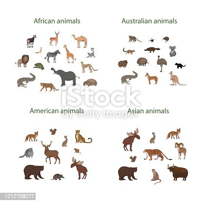 Vector illustration, set of cartoon African, American, Asian and Australian animals. Okapi, impala, lion, chameleon, zebra, lemur jaguar armadillo deer raccoon fox echidna squirrel hare koala crocodile elk