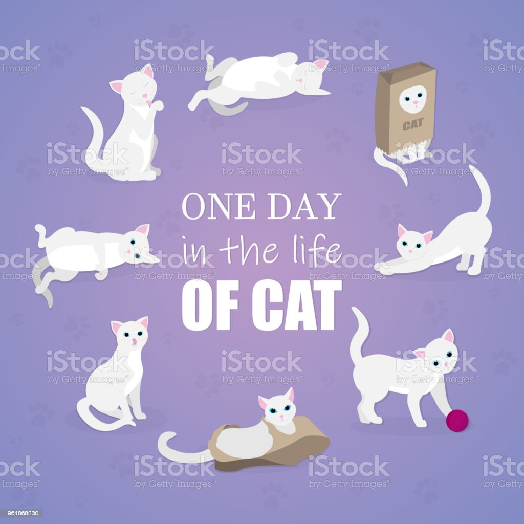 Vector set of cartoon images of cute different cat with different actions and emotions. Pet. Vector illustration. Positive character. royalty-free vector set of cartoon images of cute different cat with different actions and emotions pet vector illustration positive character stock illustration - download image now