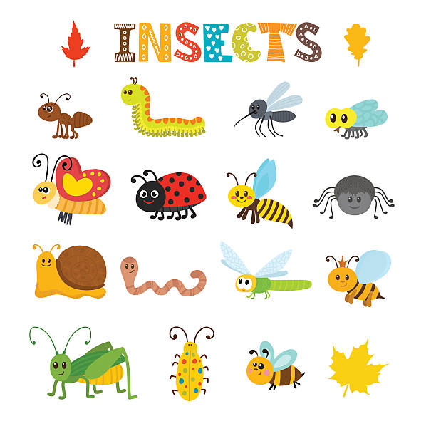 ilustraciones, imágenes clip art, dibujos animados e iconos de stock de vector set of cartoon insects. colorful bugs collection - insecto