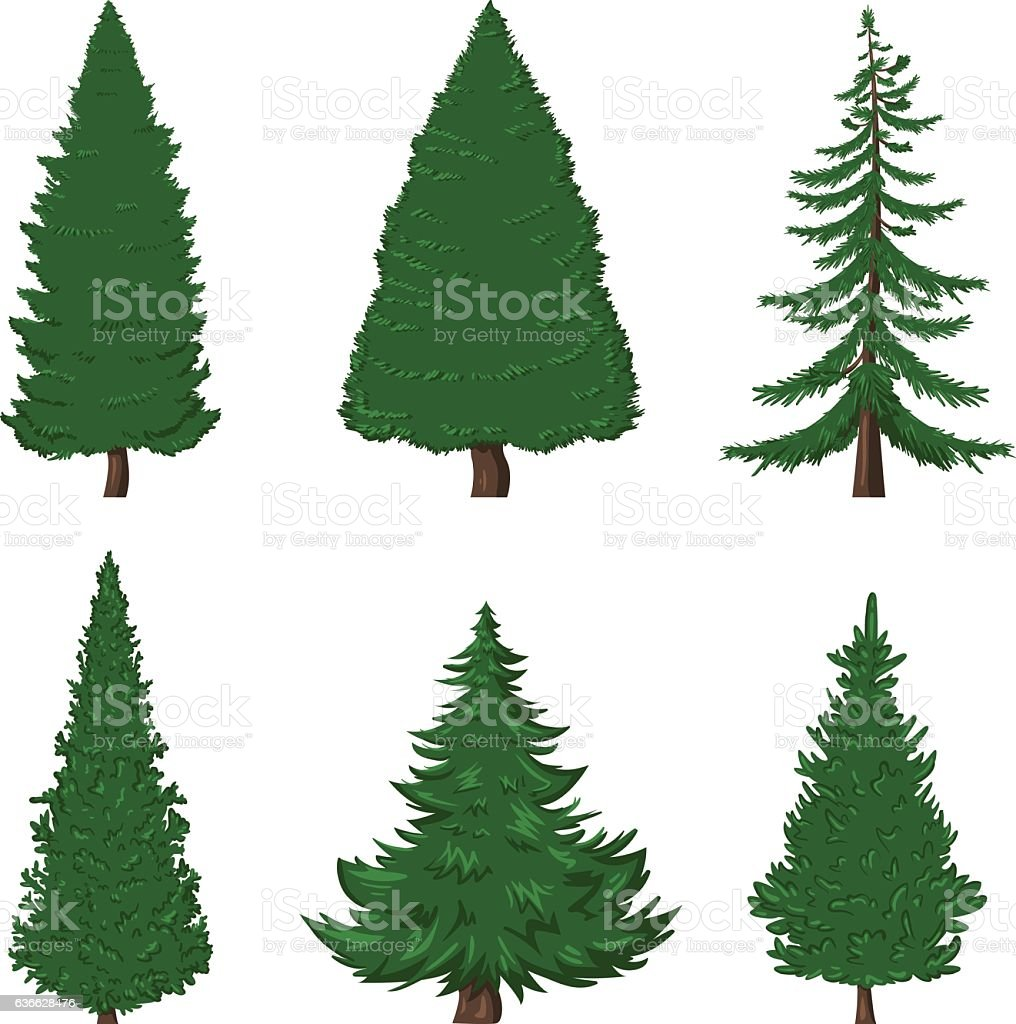 Vector Set Of Cartoon Pine Trees On White Background Royalty Free