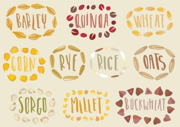 ilustrações de stock, clip art, desenhos animados e ícones de vector set of cereal emblems. - quinoa