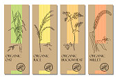 Vector set of cereal labels with grains and plants sketches: oat, rice, buckwheat and millet