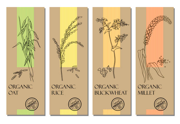 ilustrações de stock, clip art, desenhos animados e ícones de vector set of cereal labels with grains and plants sketches: oat, rice, buckwheat and millet - aveia