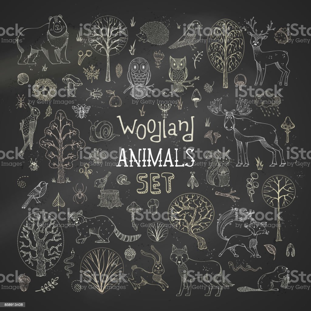 Vector set of chalk autumn trees, animals, birds and insects on blackboard background. vector art illustration
