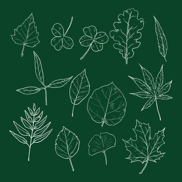 Blackboard Maple Woods Illustrations Royalty Free Vector